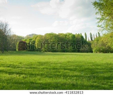 Beautiful meadow and tree in the park #411832813