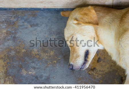 Labrador sleep on cement. #411956470