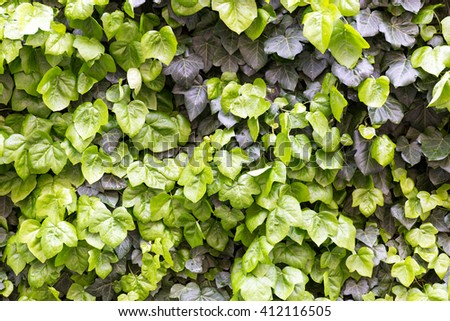 Background - leaves , wallpaper , texture #412116505