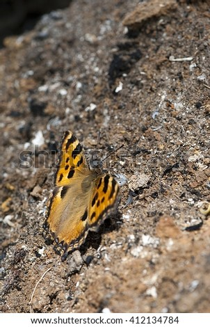 Butterfly on a background of brown leaves, ground and dry leaves in autumn.  #412134784