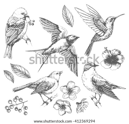 Set of  of birds and flowers, line drawings,  ink drawing, hand drawn  illustration, Vector