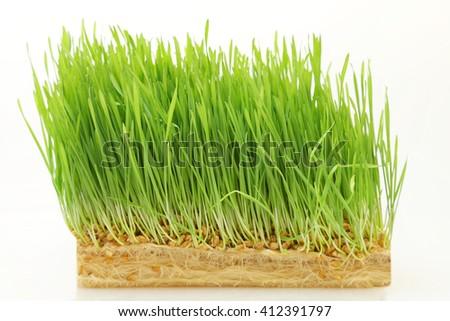 Wheat on white background #412391797