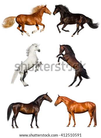 Group of horse collection isolated on white background #412510591