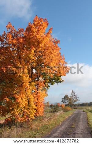 Leaves  #412673782