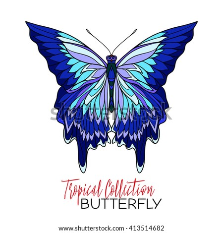 Colored Tropical butterfly. Vector illustration. #413514682