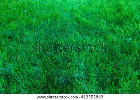 Grass texture #413555869