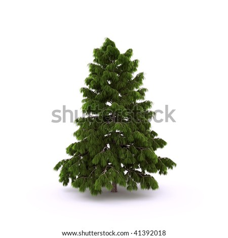 Pine on the white background #41392018