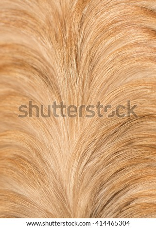 dog fur as background. texture #414465304