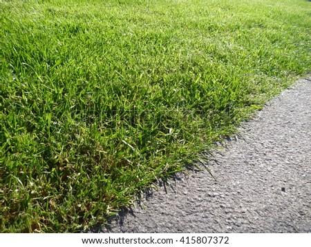 a green grass with grey concrete border #415807372