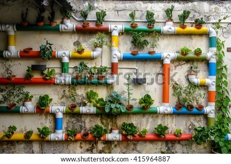 Urban Gardening, Malacca, Malaysia #415964887
