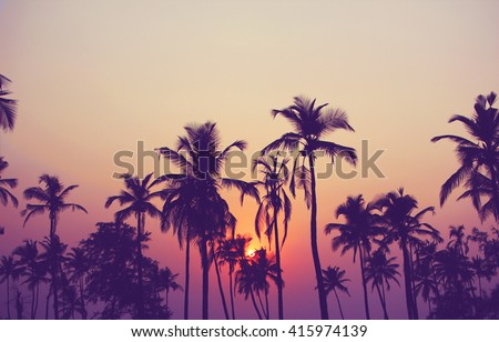 Silhouette of palm trees at sunset, vintage filter Royalty-Free Stock Photo #415974139