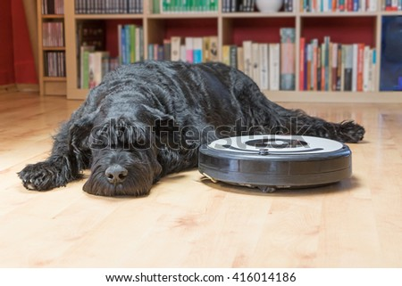 Bored Giant Black Schnauzer dog is lying next to the robotic vacuum cleaner on the floor. All potential trademarks and control buttons are removed. #416014186