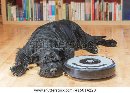 Bored Giant Black Schnauzer dog is lying next to the robotic vacuum cleaner on the floor. All potential trademarks and control buttons are removed.View from a higher angle.  #416014228