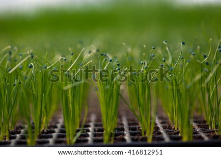 Cultivation of seedlings Ecology World Environment Day CSR Seedling Go Green Eco Friendly Earth Health Care Food Garden New Life concept #416812951