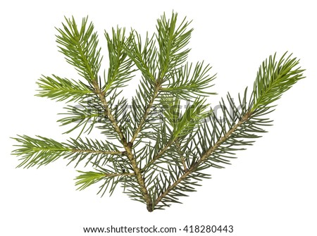 Fir tree branch isolated on white background #418280443
