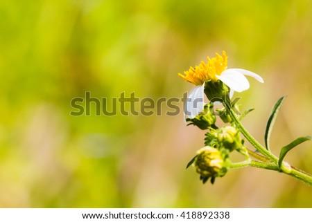 Natural flower #418892338