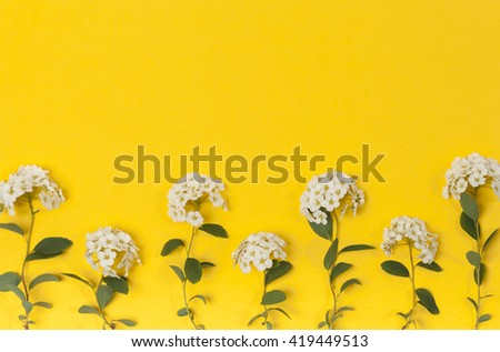 white flowers on yellow background. Blooming concept. Flat lay. #419449513
