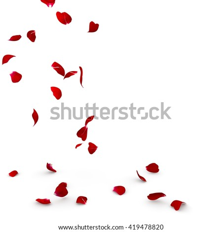 Rose petals fall to the floor. Isolated background #419478820