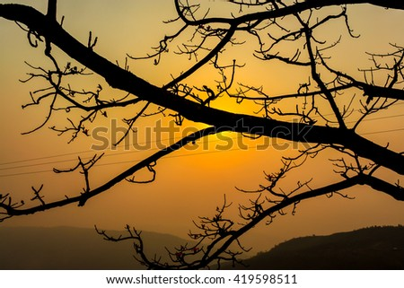 A beautiful sunset behind a tree branch in Ukhrul district of Manipur in India  #419598511