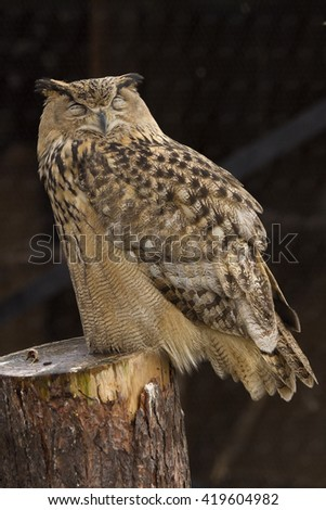 A cute owl perched on a tree stump #419604982