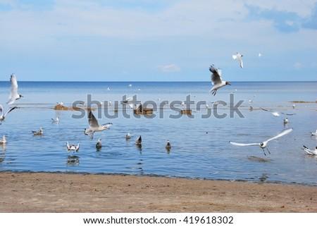 Seagulls at the Beach #419618302