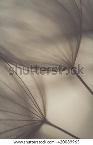 Big dandelion on natural background. Spring background with dandelion #420089965