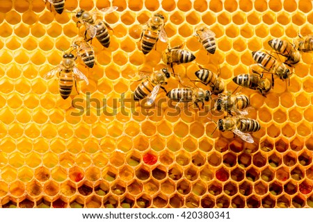 closeup of bees on honeycomb in apiary - selective focus, copy space