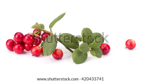 Fresh hand-picked forest Cowberry isolated on white background #420433741