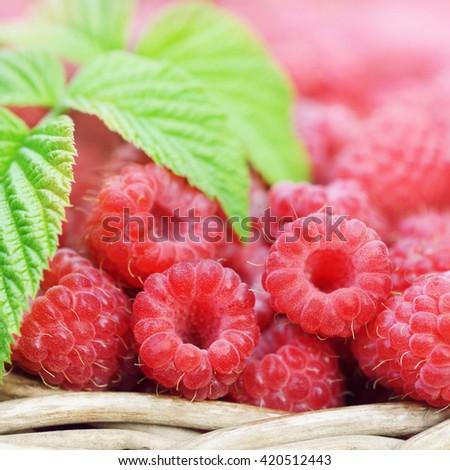 Basket of fresh ripe sweet raspberries, selective focus #420512443