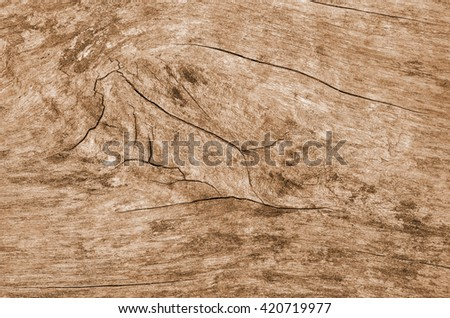 Wood texture. Lining boards wall. Wooden background pattern. Showing growth rings #420719977