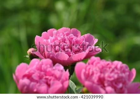 flower #421039990