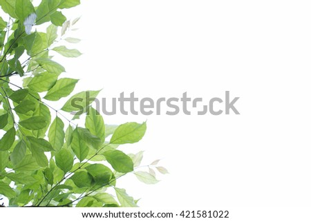 Green young leaves border on white background with copy space #421581022