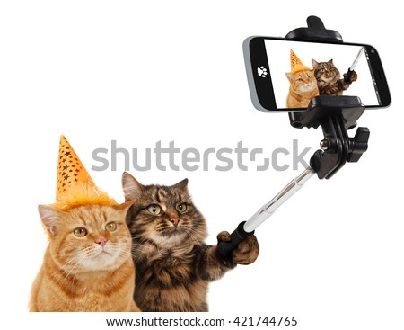 Funny cats are taking a selfie with smartphone camera. Celebrate birthday.