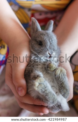Little grey bunny rabbit