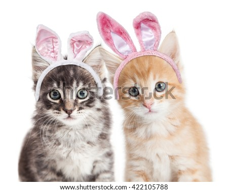 Closeup photo of two adorable kittens wearing Easter bunny ears