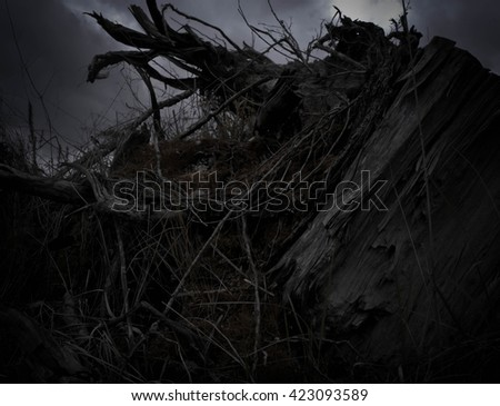 dark, in the wood an old big stub, a dry and mouldering, black gloomy picture
