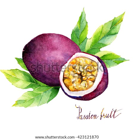 watercolor  illustration tropical fruit. Hand drawn on white background, passion fruit #423121870