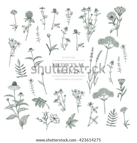 Vector hand drawn collection of medicinal, cosmetics herbs. St. John's Wort, echinacea, lavender, valerian, chamomile, calendula, dog-rose, clover plants. #423614275