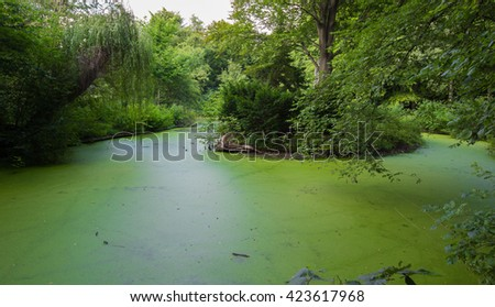 Pond covered with green leaves #423617968