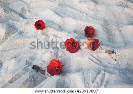 Beautiful tropical flowers on the white sand, Maldives #423919807