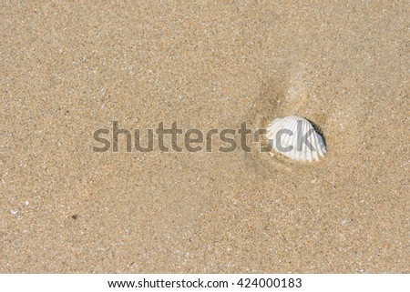 fossil shell on the sand beach, background or backdrop #424000183