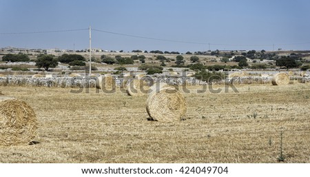 Italy, Sicily, Ragusa Province, countryside, harvested hay field #424049704