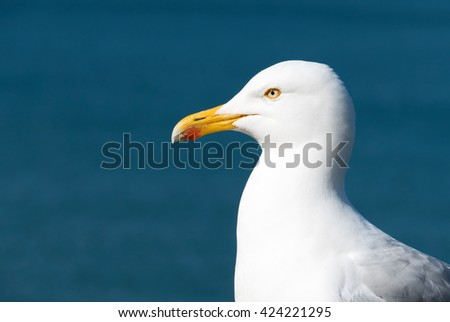 Seagull bird with blue sea background. #424221295