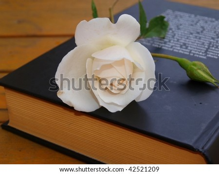 Rose lying on the book #42521209