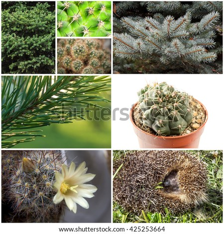 Barbed collage of eight different pictures with plants and hedgehog. #425253664