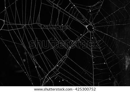 Spiderweb Royalty-Free Stock Photo #425300752