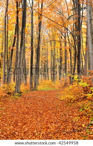 forest in autumn #42549958