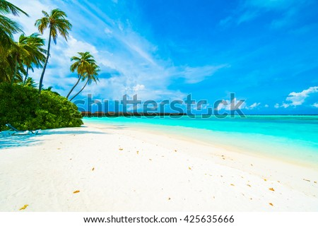 Beautiful tropical beach and sea in maldives island with coconut palm tree and blue sky background #425635666
