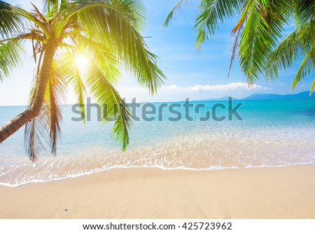 Palm and tropical beach #425723962