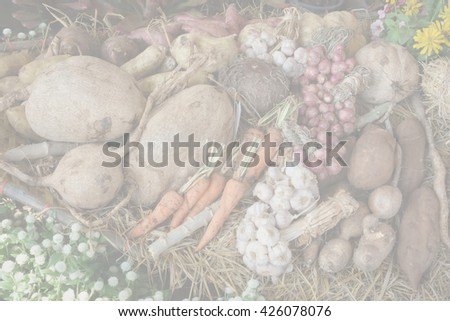 Blur onion garlic vegetable herb and food in the garden abstract background #426078076